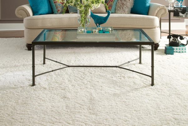 Glitterati Fashion Destination Stainmaster carpet shag
