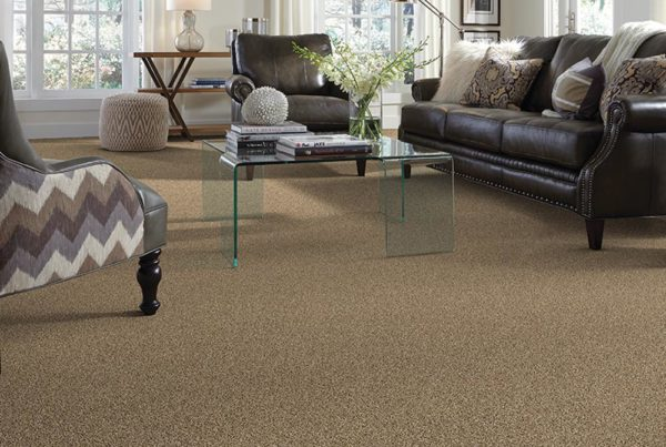 Tailored Touch Fashion Destination CarpetsPlus Stainmaster Carpet